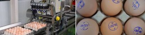 Egg Marking System