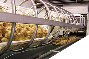 Basket Automated Tipping & Chick-Shell Separation